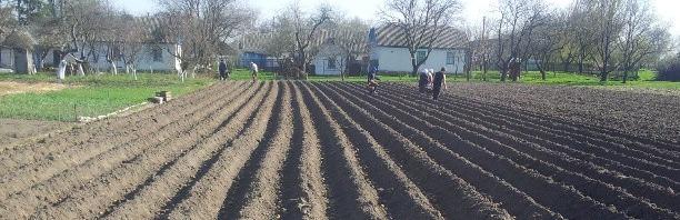 А там на поле виднеются рабы. В этом году я имею честь быть надзирателем :)