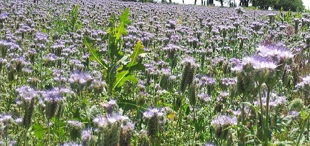 А сегодня цветочки синенькие и штаны целые :)